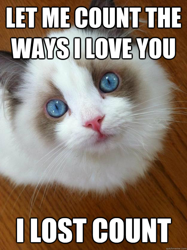 Let me count the ways I love you I lost count - anti grumpy cat ...